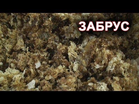 Забрус вкуснее и полезнее сотового мёда.