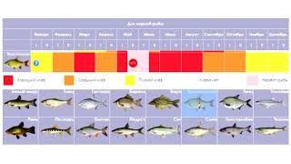 Рыболовный календарь 2019 год