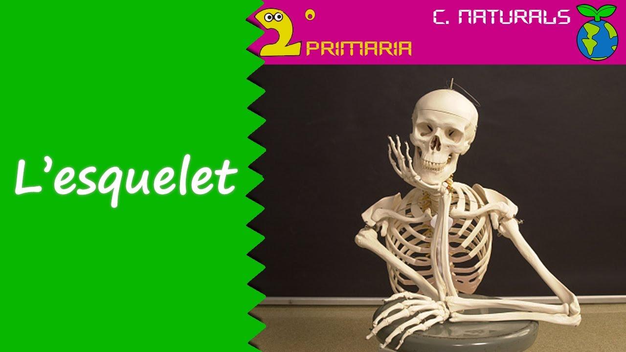 Ciències de la Naturalesa. 2n Primària. Tema 2. L'esquelet