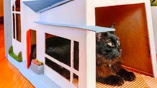Woman's Brilliant Invention For Her Cats Also Keeps The House Tidy by Did You Know Animals?