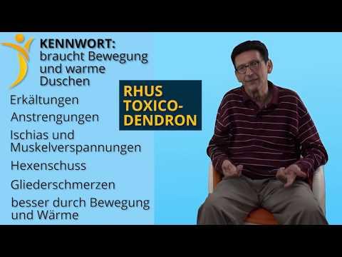 Lektion 13 - Toxicodendron quercifolium (Rhus Toxicodendron)
