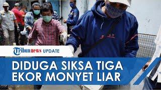 Youtuber di Jaksel Diduga Siksa 3 Ekor Monyet demi Konten, Aparat Langsung Turun Tangan