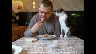 Скорее накорми кота, хозяин, когда он просит ! ( Rather, feed the cat, the owner, when he asks! )