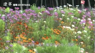 瀋陽紫煙薰衣草莊園