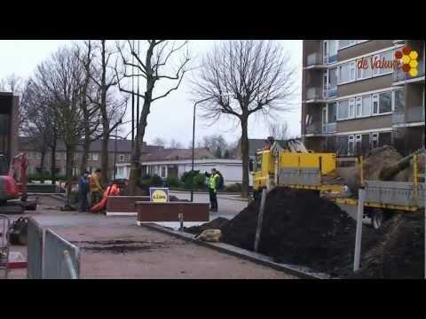 Aanplant 25 platanen rond parkeerterrein De Valuwe in Cuijk