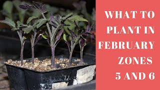 What Seedlings Can you plant in February Zones 5 and 6