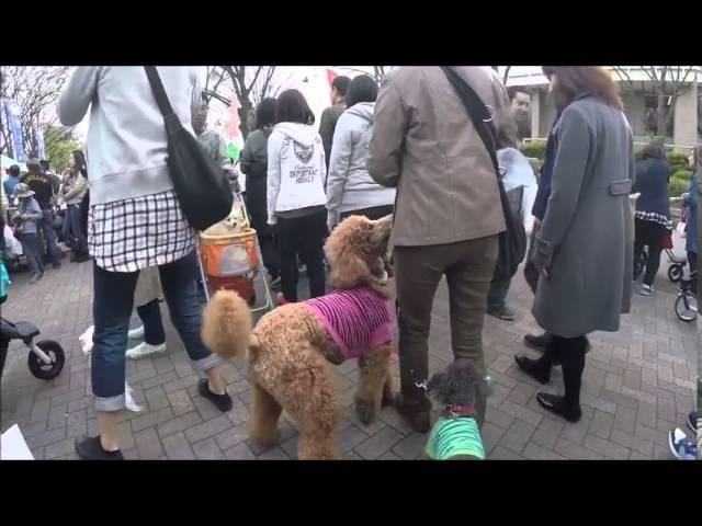 2015-04-12 Yoyogi Park - Dogs