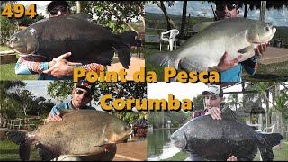 Os gigantes Tambas do Point da Pesca - Fishingtur 494