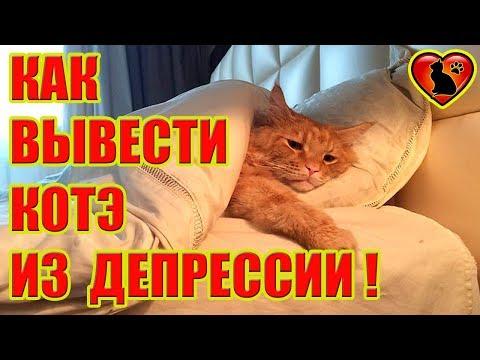Как распознать депрессию у своего кота: признаки и помощь!