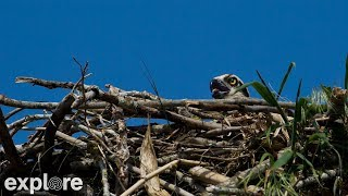 Osprey Nest Branch View powered by EXPLORE.org