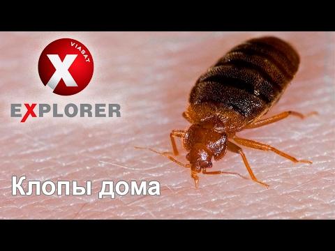 Постельные клопы - фильм о домашних кровососущих паразитах
