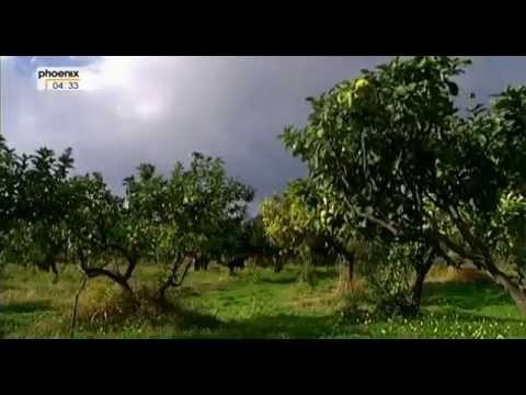 Das grüne Gold Kalabriens - Das Geheimnis von Earl Grey und Kölnisch Wasser [Doku, D 2007]