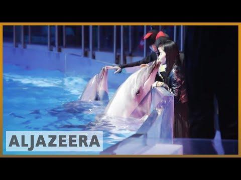 🇨🇳 Al Jazeera probe unveils rampant animal abuse in China | Al Jazeera English