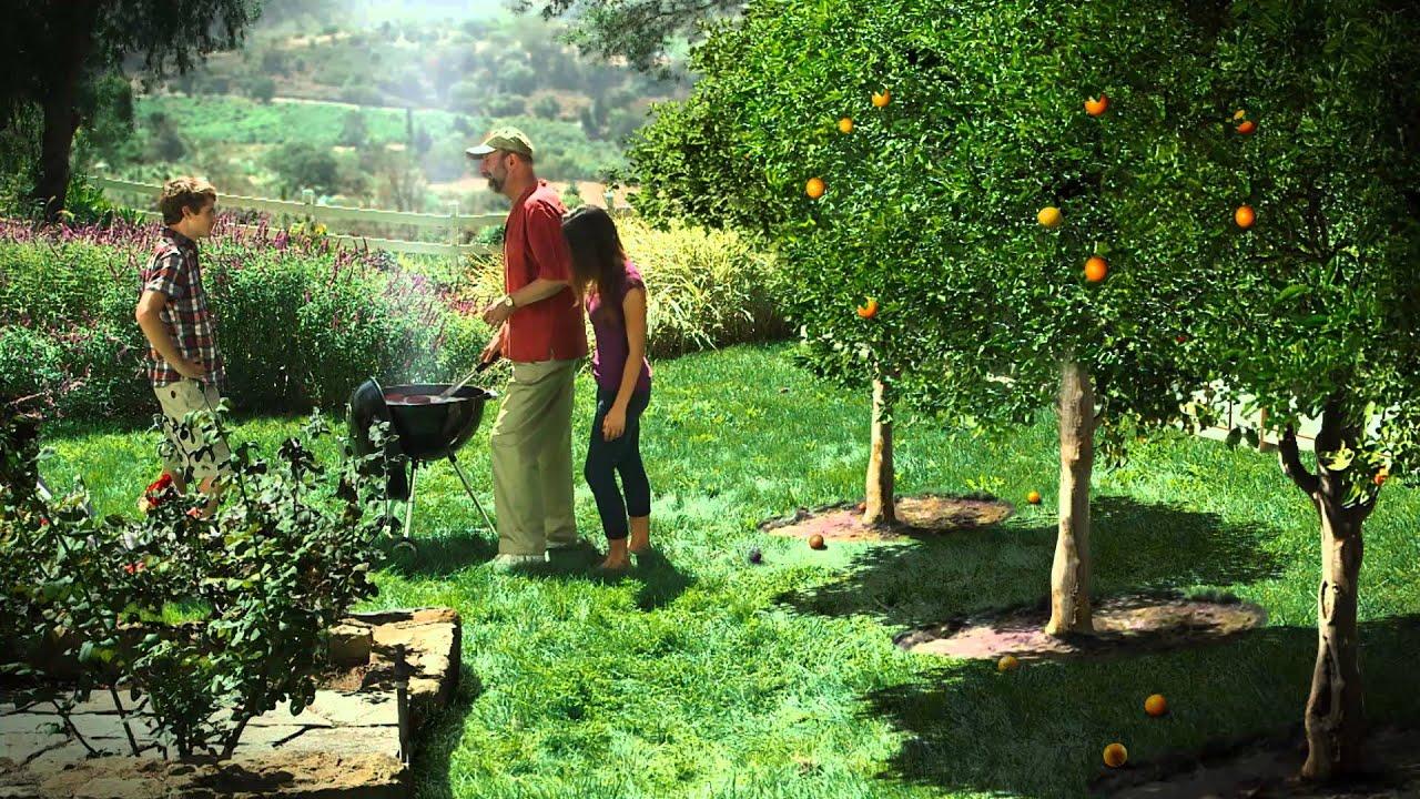 Citrus Greening Disease | City of Garden Grove