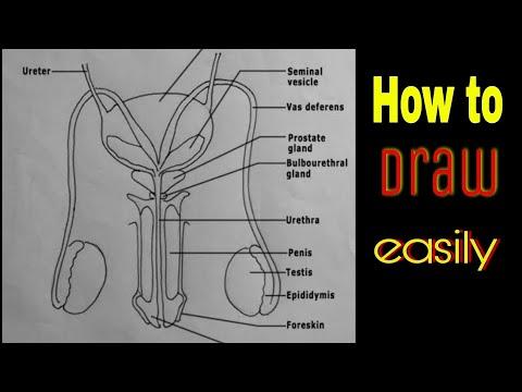 Mely gyertyák a legjobb segítség a prostatitisben