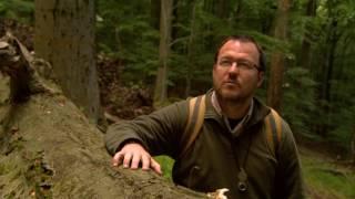 Harmóniában a természettel - erdők