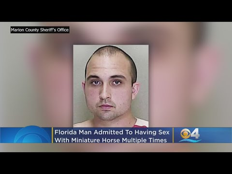 Florida Man Arrested For Having Sex With Miniature Horse On Multiple Occasions