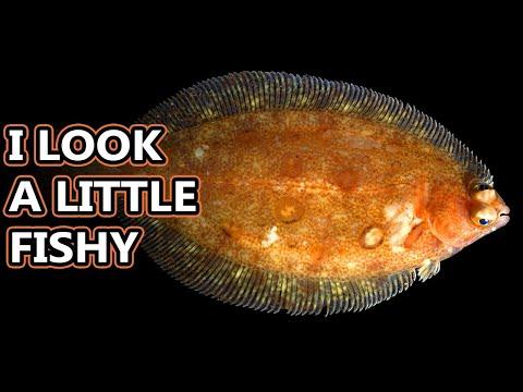 download lagu mp3 mp4 Flatfish, download lagu Flatfish gratis, unduh video klip Download Flatfish Mp3 dan Mp4 Latest Gratis