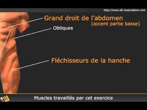 Lexcroissance dans le muscle