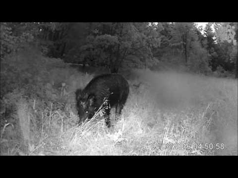 Test Wildkamera Medion