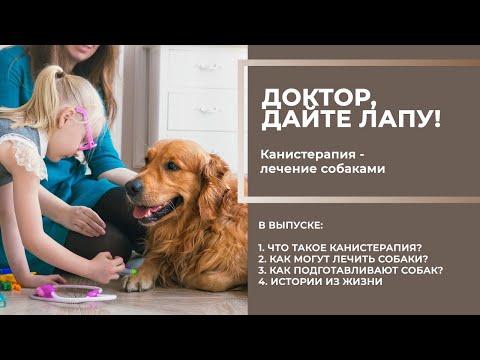 Канистерапия: как и кого лечат с помощью собак