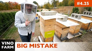 A Beekeeping Lesson: Learn From My Mistake! (Carniolan Hive Update)