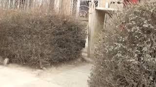 Афганистан 2018. Кабул. Советский микрорайон