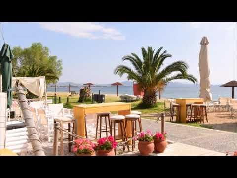 T.S. - Mango Beach Bar
