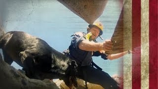 Search and Rescue Dogs | American Dog With Victoria Stilwell
