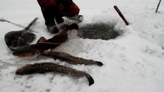 Зимняя рыбалка налим - это не диалоги о рыбалке