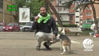 Verde di Rabbia 18 04 17