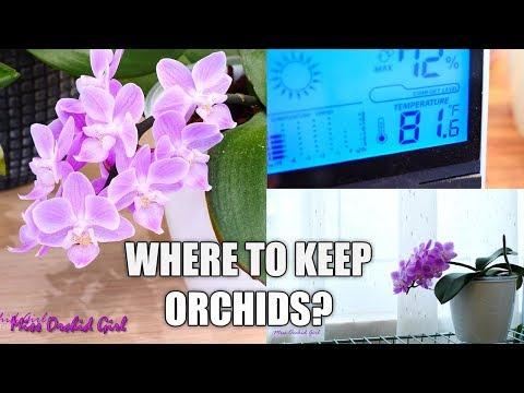 , title : 'Orchid Care for Beginners - Where should I put my Phalaenopsis Orchid in my house?