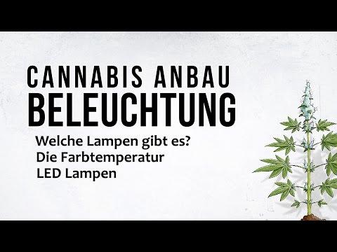 Cannabis Anbau - Die Beleuchtung