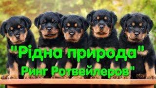 Выставка собак. Ринг ротвейлеров. Рідна природа. Одесса. Dog show. VLOG DOG. CAC. CACIB. Чемпионы.