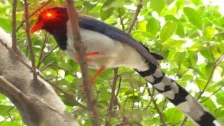 東張西望   小心!天水圍有進擊的「兇鳥」出沒!