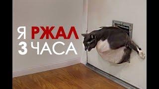 ПРИКОЛЫ С КОТАМИ подборка 2018  # JOKES WITH CATS # Funny cat Уматовые кошки! Я РЖАЛ 3 ЧАСА