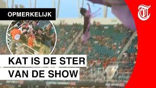 Publiek houdt adem in: kat overleefd metershoge val in stadion
