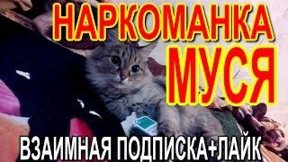 НАРКОМАНКА МУСЯ. ВЗАИМНАЯ ПОДПИСКА+ЛАЙК. СМЕШНЫЕ КОТЫ