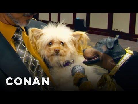 Pes Triumph na předávání Zlatých obojků - CONAN