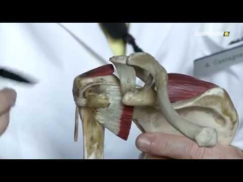 Iniezioni di antidolorifici articolazioni