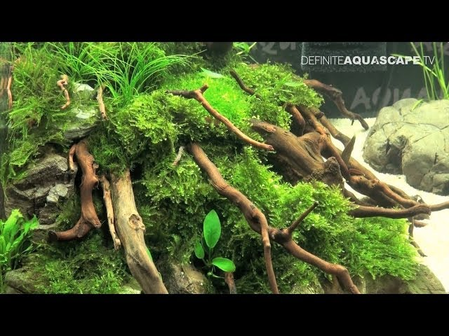 Aquascaping - Best nanoaquariums of ZooExpo 2011, pt.1