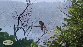 Elephant Hills - Thailand