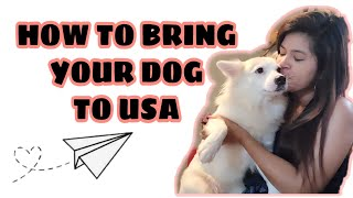 HOW TO BRING YOUR DOG TO USA
