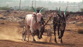Hireasangi Bulls   Lokapur Suthubandi Race