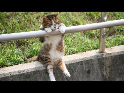 【 夕暮れの お座り猫ちゃん 】 この日常は非日常? / [Sitting cat at sunset] Landscape daily for this cat, or non-routine? (видео)