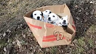 Poor 5 Puppies Rescued After Being Found Abandoned In A Box | Happy Ending