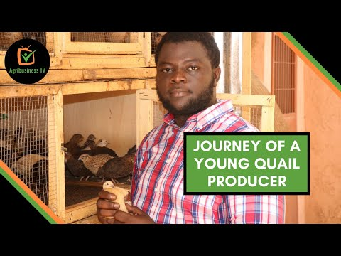 Burkina Faso: Journey of a young quail producer Burkina Faso: Journey of a young quail producer