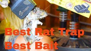 BEST BAIT TRICK FOR SMART RATS |  BEST TRAP | BEST WAY  | TRAP RATS