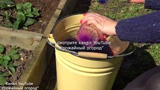 Чем можно подкормить клубнику весной видео