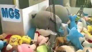 Кот мешает вытащить игрушку